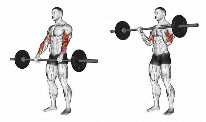 ダンベルカール 鍛えられる筋肉