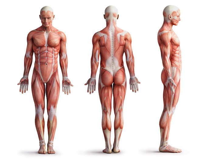 インナーマッスルと体幹の違い