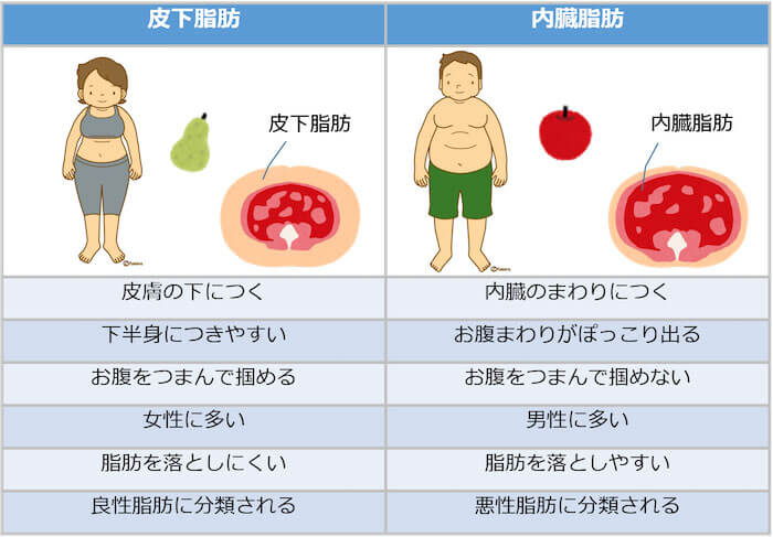 内臓脂肪 皮下脂肪 違い
